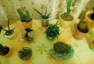 Květiny doma 1