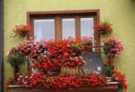 Výzdoba oken 14