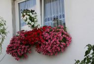 Výzdoba oken 12