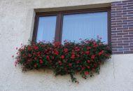 Výzdoba oken 11