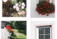 Výzdoba oken 2